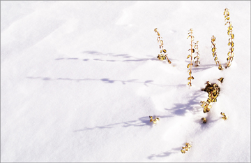 hiverb.jpg