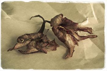 Métamorphoses dans Non classé feuilles